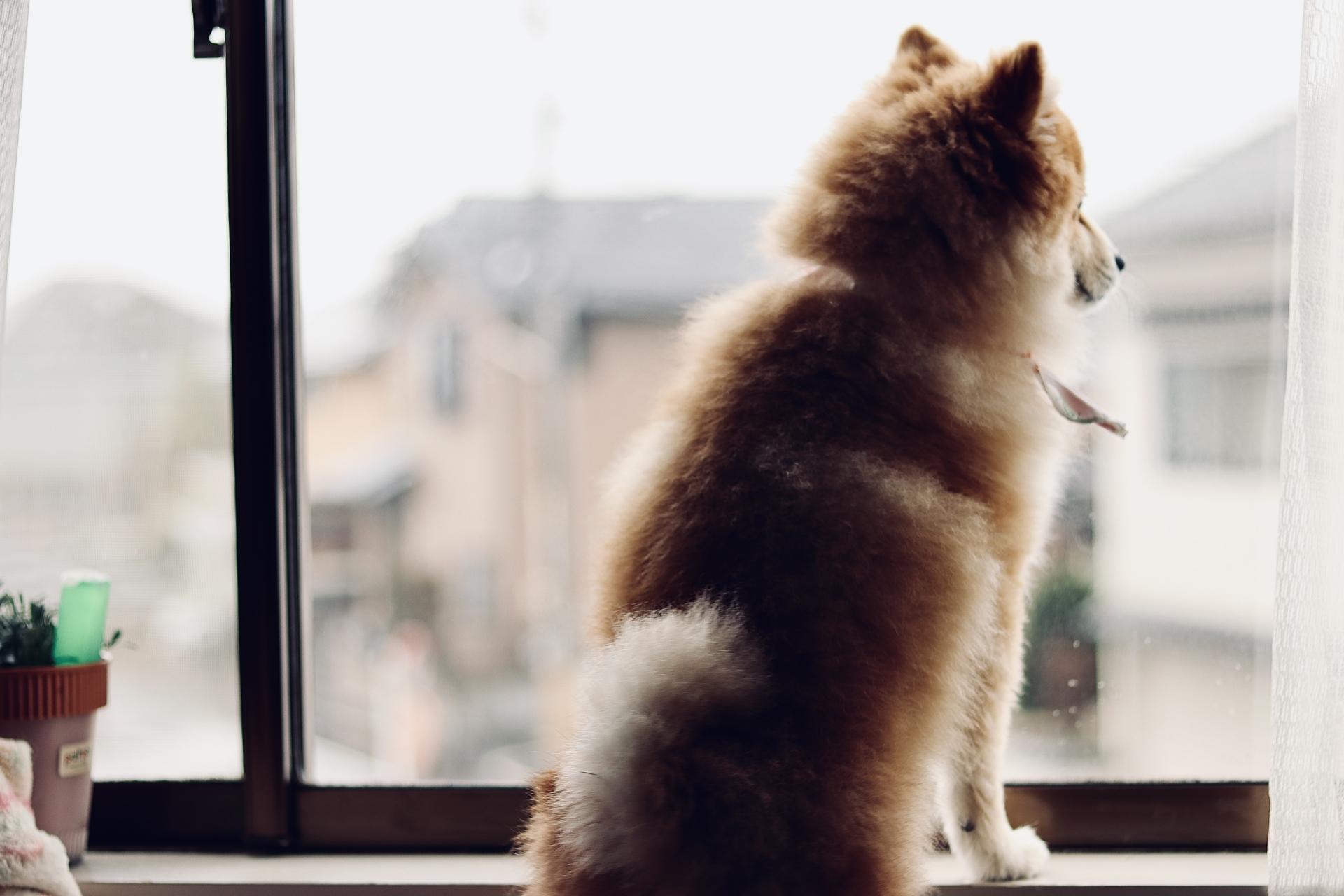 梅雨 愛犬