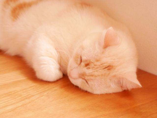 猫 10円ハゲ